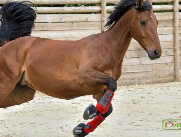 lovas gél ízületekhez)