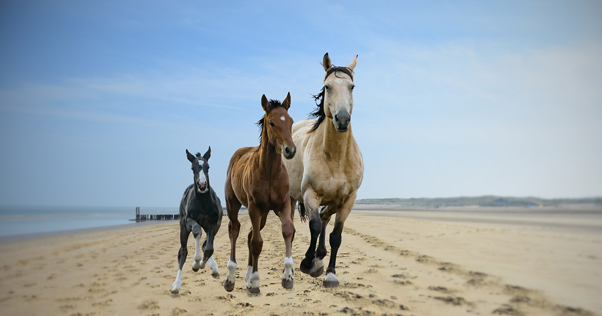 Horses 5962551 1920